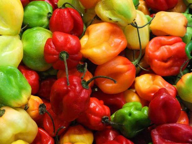 Hot-Scotch-Bonnet-Peppers1