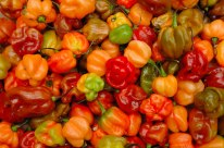 top_5Scotch-Bonnet-Chilli