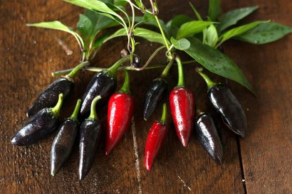 285_Black_Hungarian_Pepper_-_low_2000x
