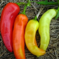 sweet-banana-pepper_profil