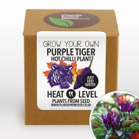 purple-tiger